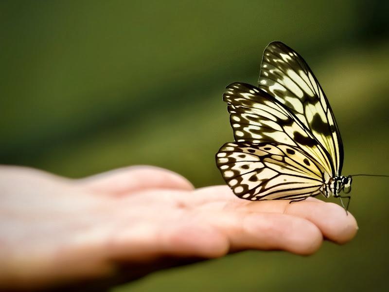 Farfalla sulla mano  di Capirizzo