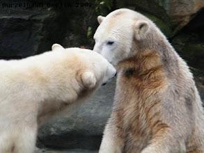 Photo: Und Knut revanchiert sich :-)