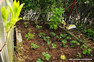 Photo: Unser Versuch und das Erdbeerbeet für den Privatgebrauch