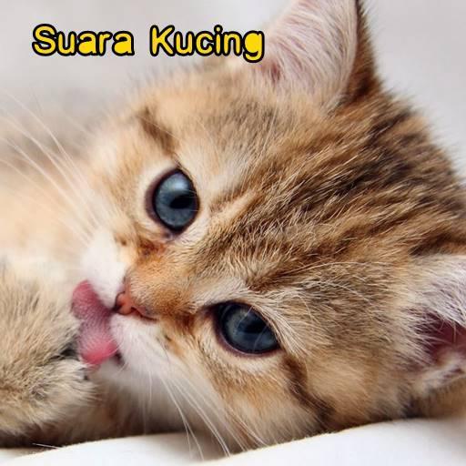 Suara Kucing Terlengkap - Aplikasi di Google Play