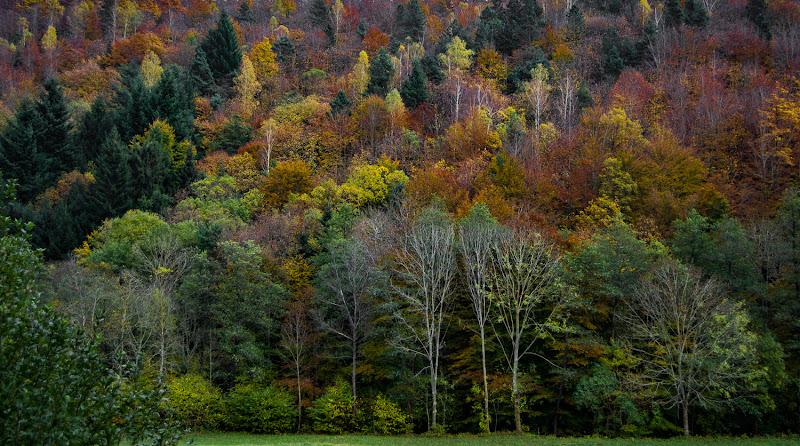 tutti i colori dell'autunno di danyds65