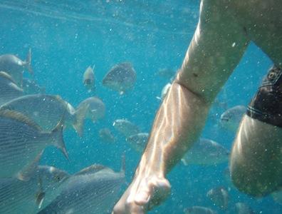 Rodeado de peixes! Só me apercebi que tinha peixes à minha volta porque os senti a tocar-me