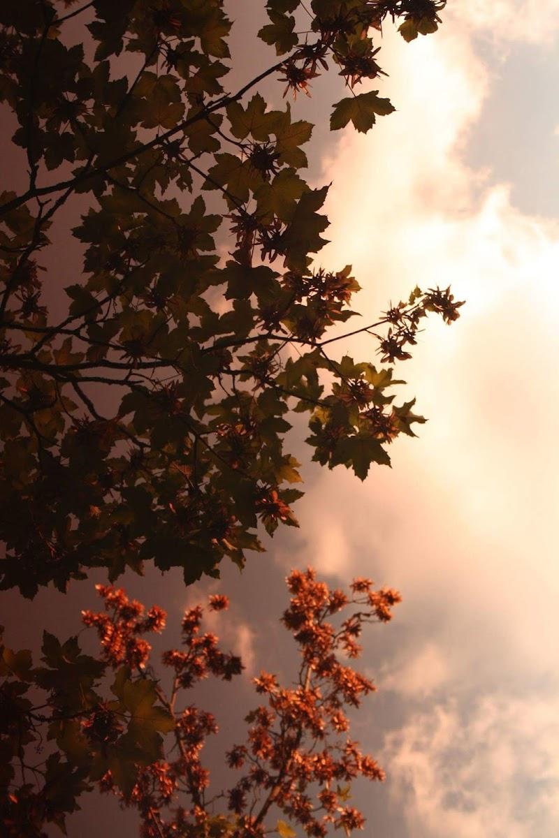 Rosso di sera bel tempo si spera di cesca_di.pietro