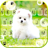 com.ikeyboard.theme.cute.white.puppy