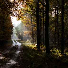 After rain comes... by Buffan Walter - Landscapes Forests ( haze, forrest, sunbeams, autumn, colors, trees, gravelroad, road, sun, rain,  )