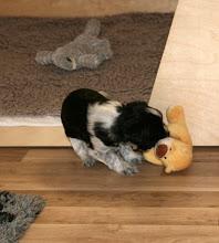 Photo: und die Erna verhaut mit Vorliebe den kleinen Teddy