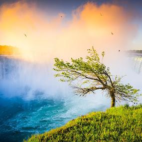 Niagara Falls in the Morning by Derek Kind - Landscapes Travel ( clouds, water, waterfalls, grass, waterscape, green, waterfall, morning, birds, sun, dawn, tree, niagara falls, blue, falls, fall, niagara, sunrise, golden, mist )