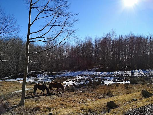 Horsewatching  di Kira003