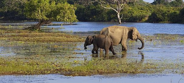 Parques Nacional Yala