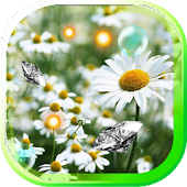 Wild Daisy live wallpaper