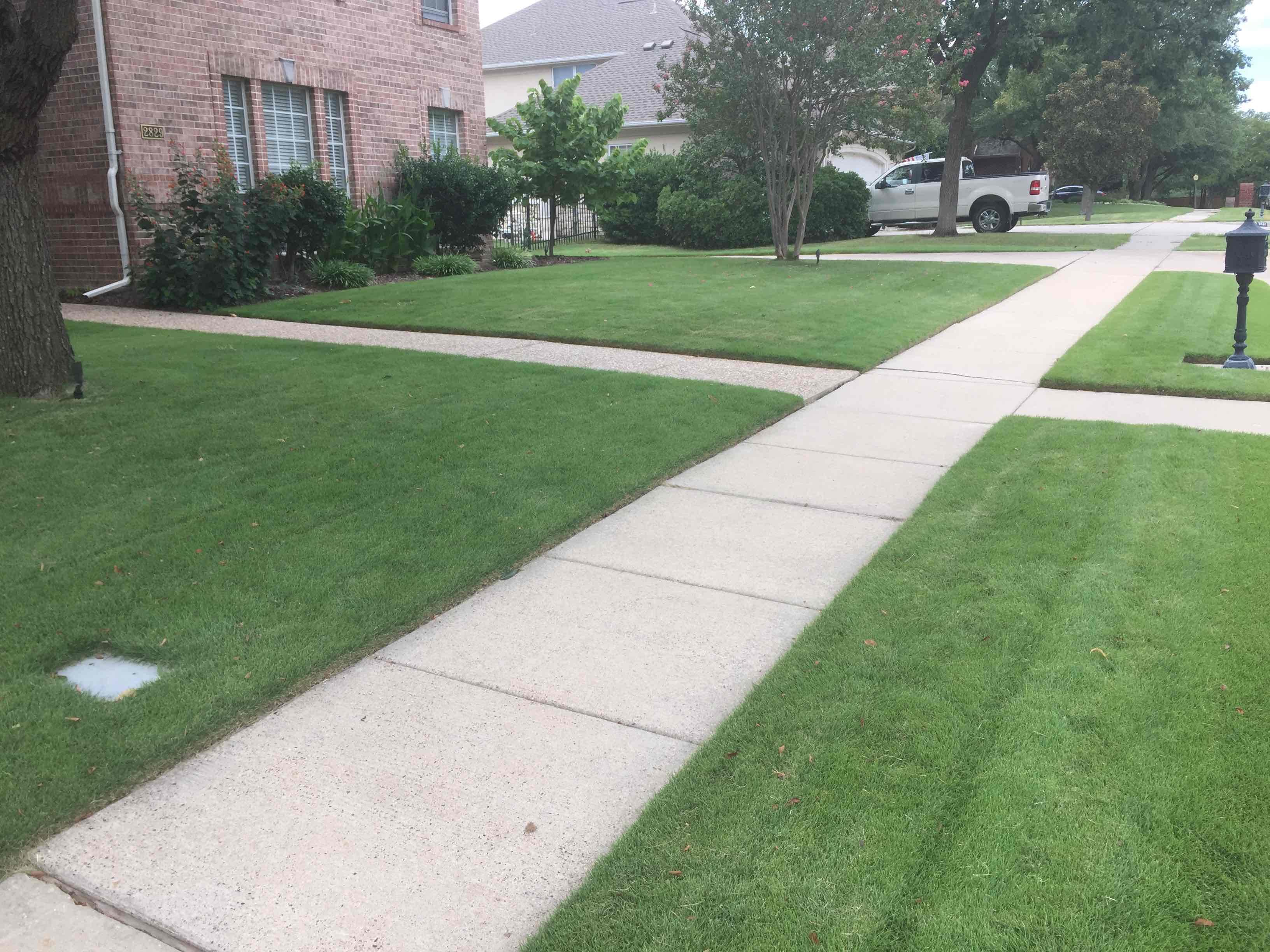 Zoysia Grass in Dallas, Texas - Frisco, Plano, Mckinney