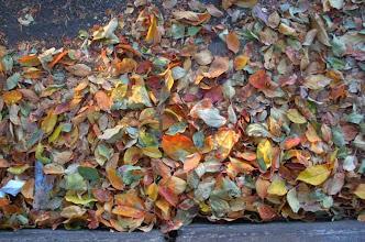 Photo: leaves deadfall street gutter Flagstaff AZ