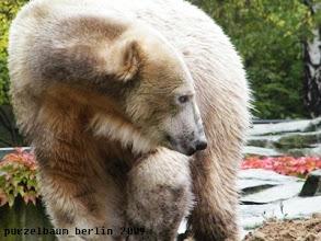 Photo: Schon ist Knut wieder unterwegs ;-)