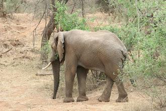 Photo: Kruger National Park. Pafuri