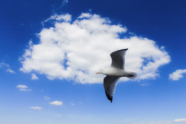 Il gabbiano e la nuvola di Erre-Gi