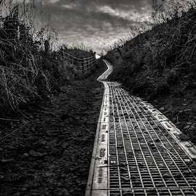 Roads we travel by Andrei Ciuta - Landscapes Travel ( leading lines, black and white, autumn, textures, lines, perspective, road )
