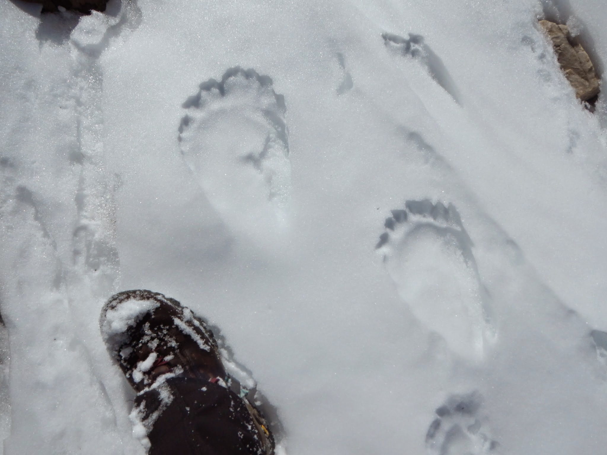 Photo: Strange features that sort of looked like footprints, but what could they be?
