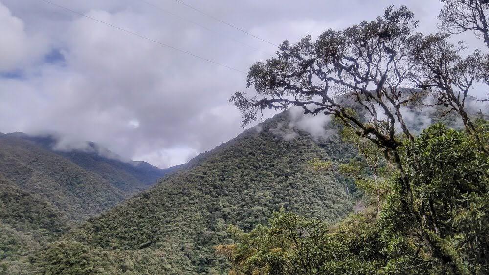 vegetation in Parque Nacional Manu