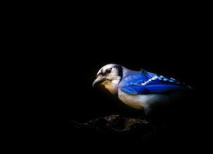 Photo: Dark Blue's