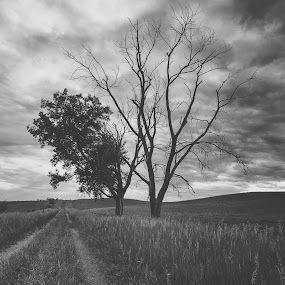 Road Home by Chris Timmerman - Landscapes Prairies, Meadows & Fields ( field, black and white, dirt road, road, landscapes, nebraska, farming,  )