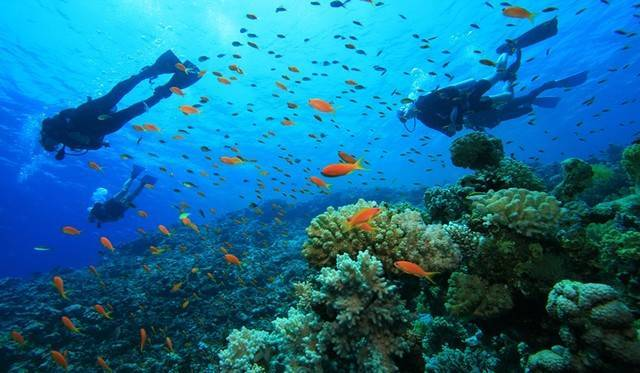 scuba diving-goa_image