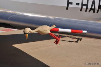 Photo: Visiblement cet oiseau n'a pas volé aussi vite !que ...