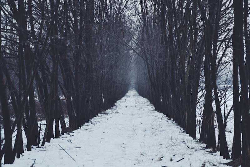 Show in The forest di Jessicafusco