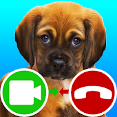 Fake Call Video Puppy Game Android APK Download Free By TenAppsAndGames