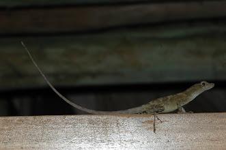 Photo: Unidentified, Esquinas Rainforest (8:42/-83:12), 18-05-2006, Author: Erwin Holzer