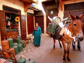 Photo: kůň bombař