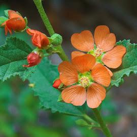Wild Flower by Victor Orazi - Flowers Single Flower
