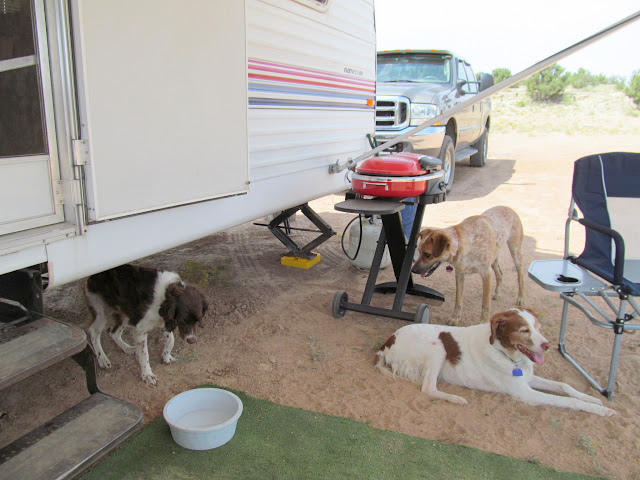 Dogs at camp on Friday afternoon