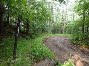 すぐ林道に出て