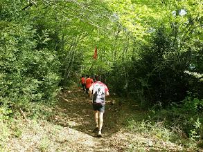 Photo: volvemos a entrar en el bosque