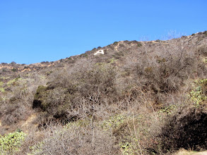 Photo: View north from Garcia Trail toward the iconic mountain monogram, which is also on private property owned by Rosedale Land Partners.