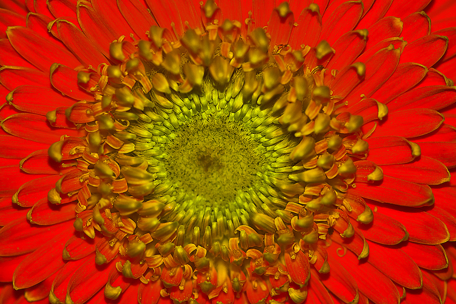 by Van Condix - Nature Up Close Flowers - 2011-2013