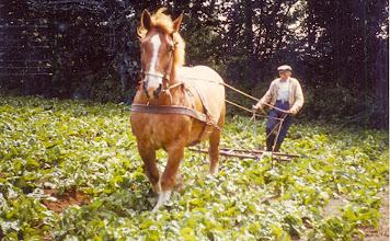 Photo: Hendrik Hollander met paard Frida
