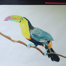 Tropical bird by Reagan Muriuki - Drawing All Drawing ( bird, colorful, drawing, bird photography, artwork )