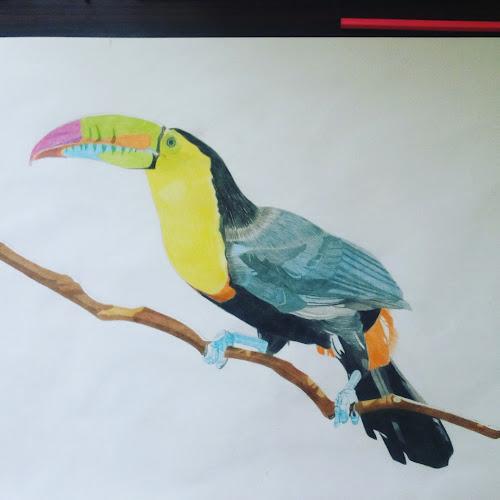 Tropical bird by Reagan Muriuki - Drawing All Drawing ( bird, colorful, drawing, bird photography, artwork )