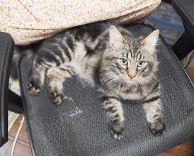 Photo: この椅子は僕のもの!…的な顔