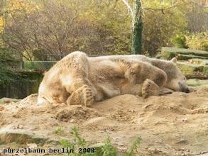 Photo: Knut schlummert friedlich weiter ;-)