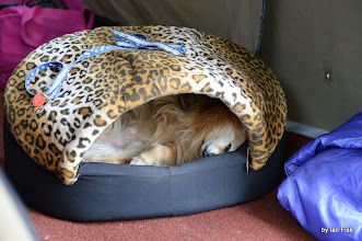 Photo: Basil having some shut eye (with eye open!)