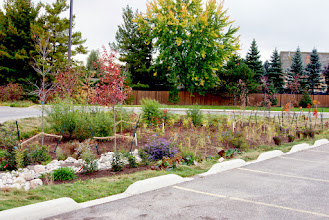 Photo: Portico Church in Mississauga expanded their parking lot. To protect the nearby creek, Credit Valley Conservation requested a bioretention garden be installed. The original design (not by Fern Ridge) looked to 'natural' for the client and we were called in to add more ornamental plants to make it more public-pleasing. Great success! More flowers, more foliage colour and more fall and winter interest!