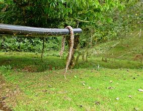 Photo: Die erste Schlange, der ich begegnet bin (hier aber schon hinterlistig erschlagen)
