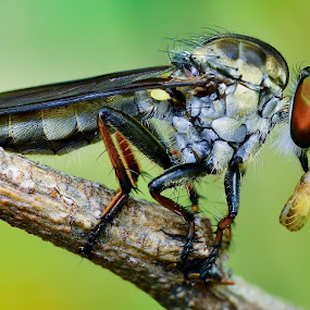 by Ahmad Zaini - Animals Insects & Spiders