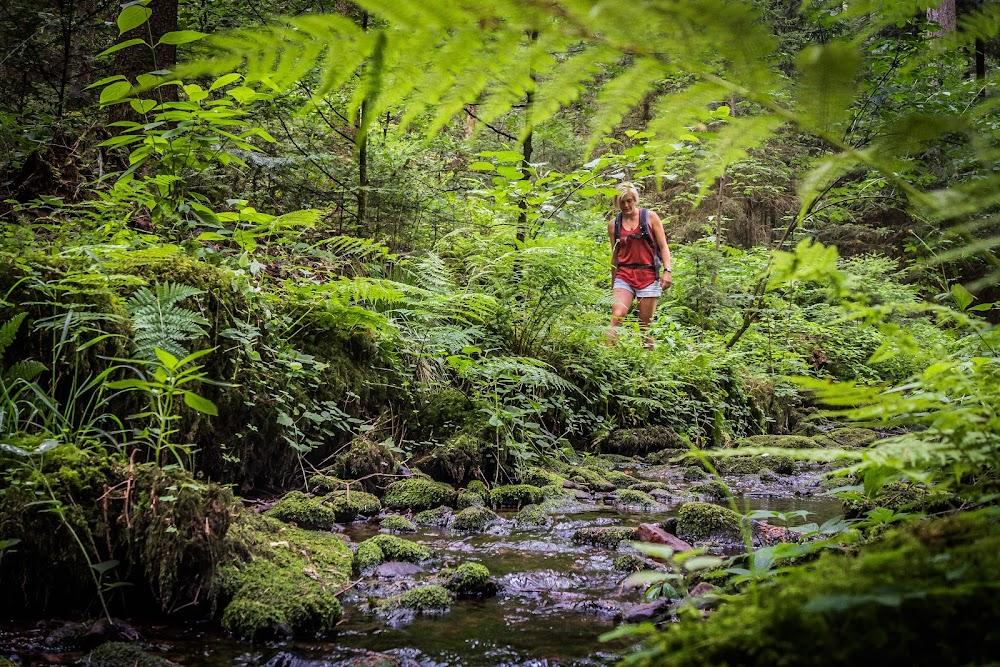 Ein Wanderer im sommerlichen Rötelbachtal