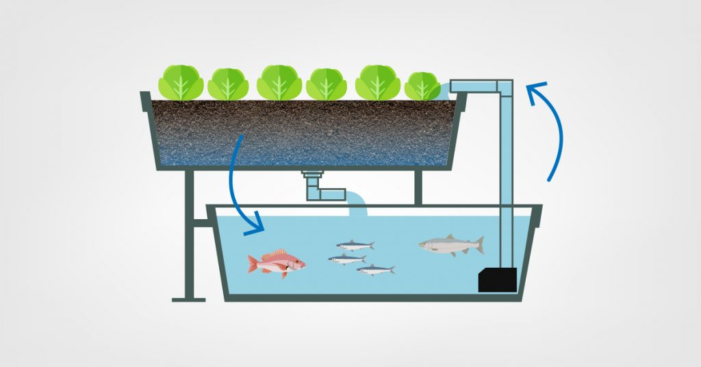 Извор: http://www.americover.com/diy/why-aquaponics-is-taking-off-in-us/