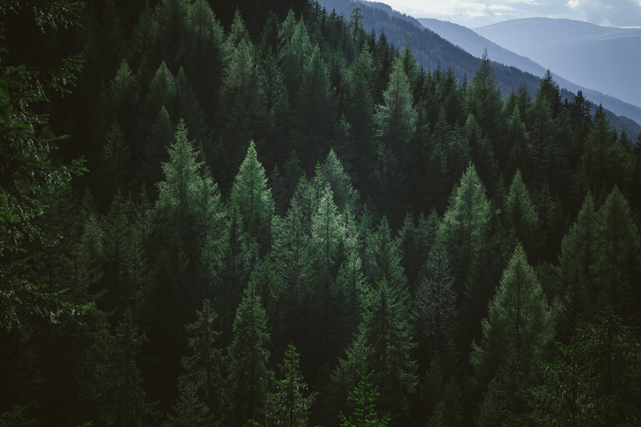 Incorporate evergreen material to keep costs low.