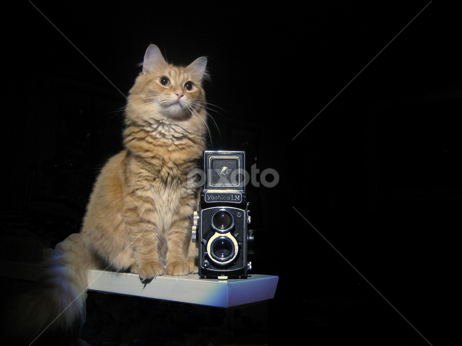 Cat and Camera by Keith Sutherland - Animals - Cats Portraits ( cat, yashica, camera, vintage )
