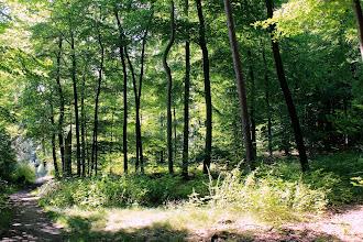 Photo: Waldstück in Höhe des Wasserwerks Großensee